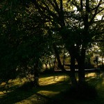 Jardin - Trampoline
